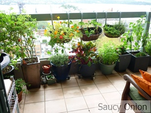 Balcony Gardening, Source: saucyonion.files.wordpress.com