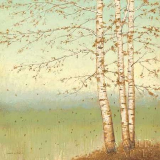 Golden Birch II with Blue Sky Poster