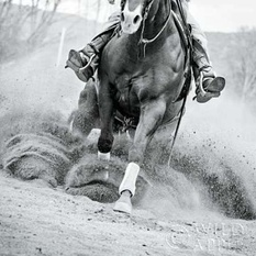 Reining In Poster