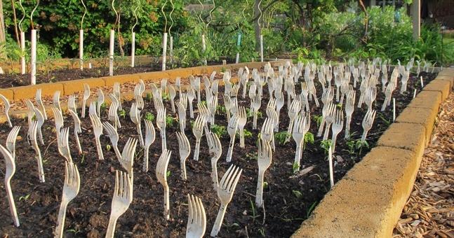 10 Unconventional Gardening Tips Basic Gardening Suggestions India