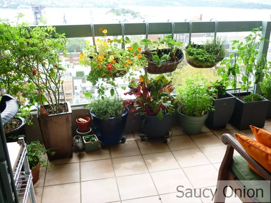 Balcony gardening tips india balcony gardening ideas for for Terrace kitchen garden india